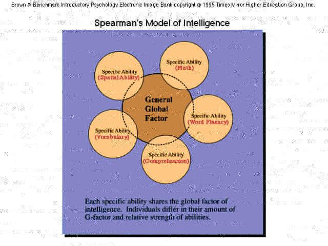 spearman cattell sternberg and gardner s theories Quizlet provides term:theories of intelligence = spearman, gardner, sternberg activities, flashcards and games start learning today for free.
